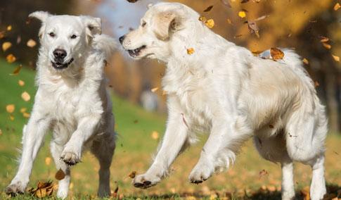 Hunde_HerbstL7uR0ES1YW53G