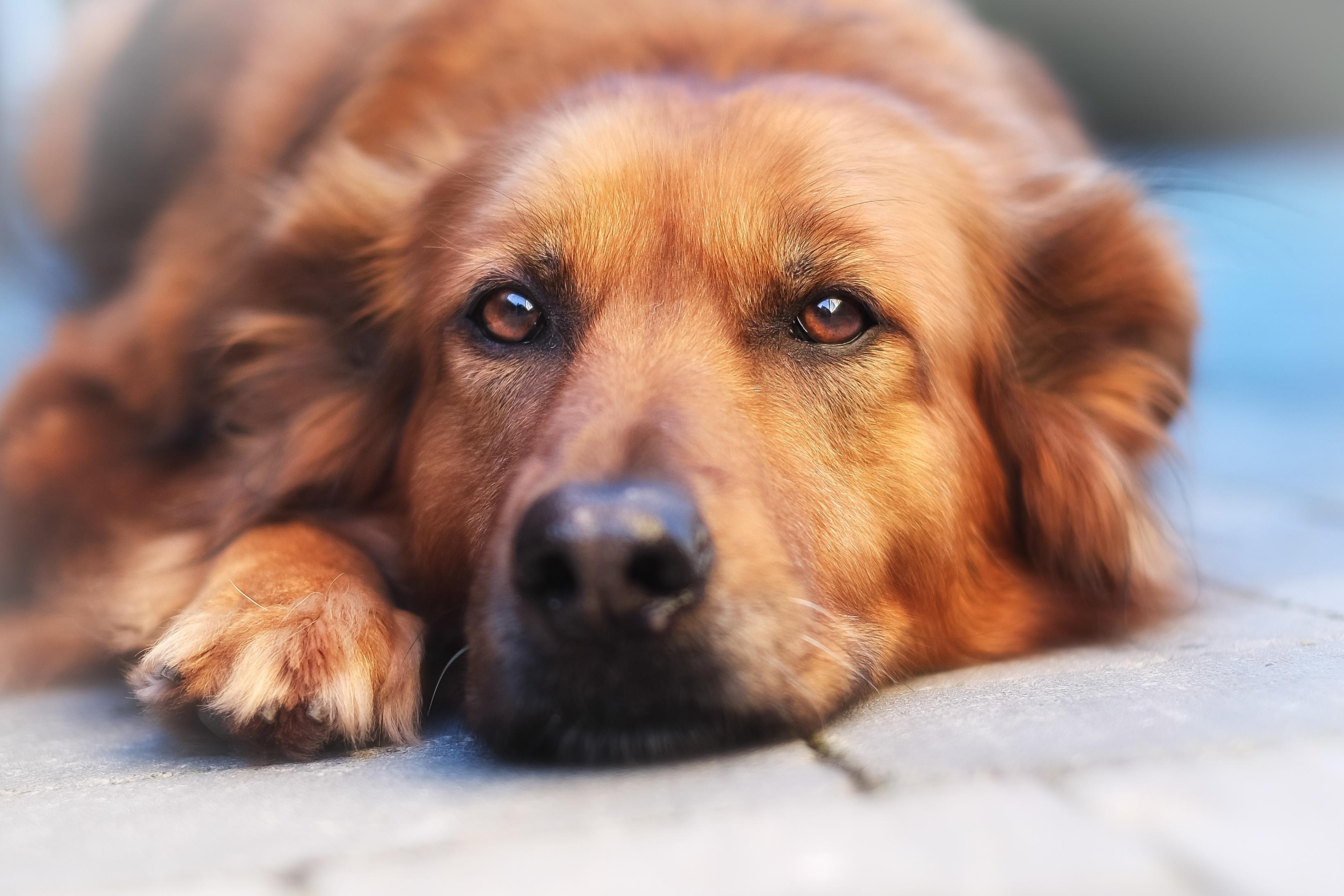 Hundezahnbürsten von emmi®-pet