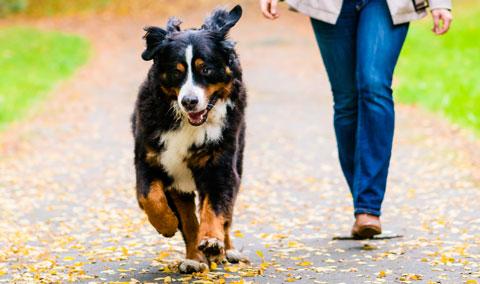 laufender_Hund