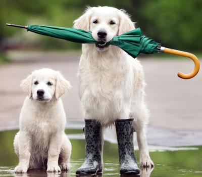 Hund_mit_Regenschirm